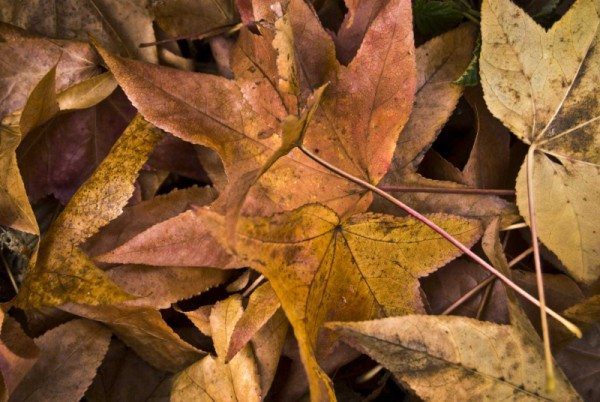 Autumn – Time to Replenish