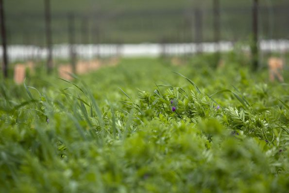 Cover Crops in the Circle of Life