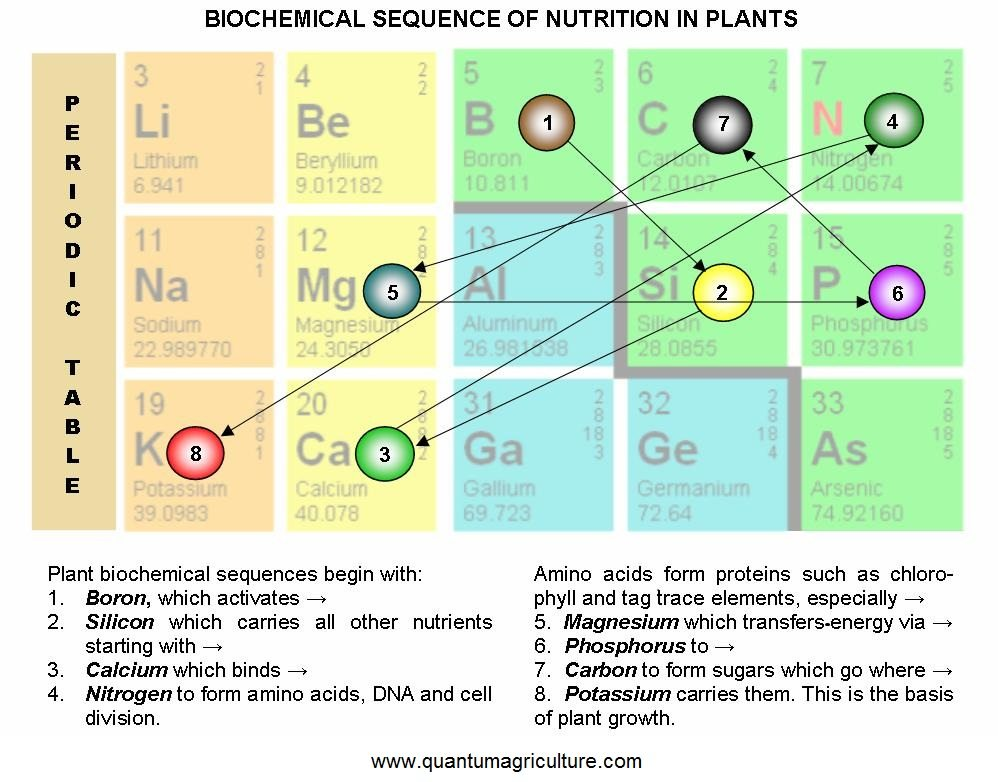 Nutrients and their impact on healthy plant growth – the Biochemical Sequence