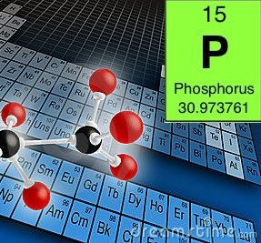 Nutrients and their impact on healthy plant growth –  P is for Phosphorus